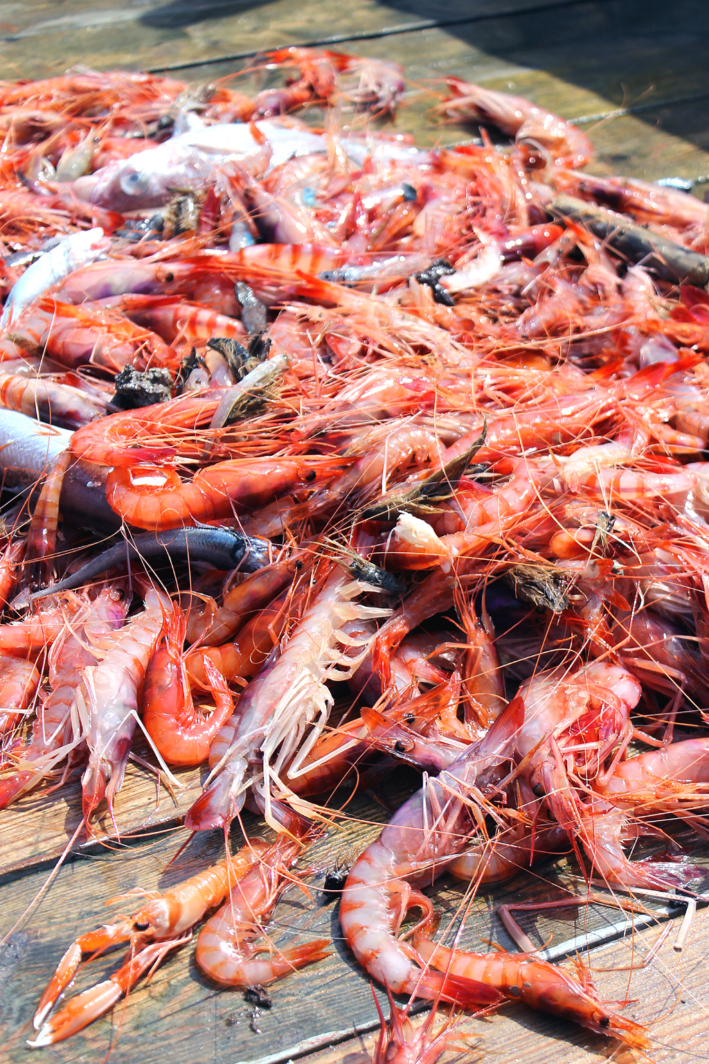 Gamberoni or Prawns from the Mediterranean Sea