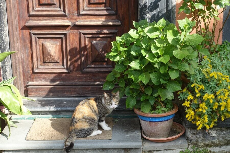 Yes, I found another cat…..