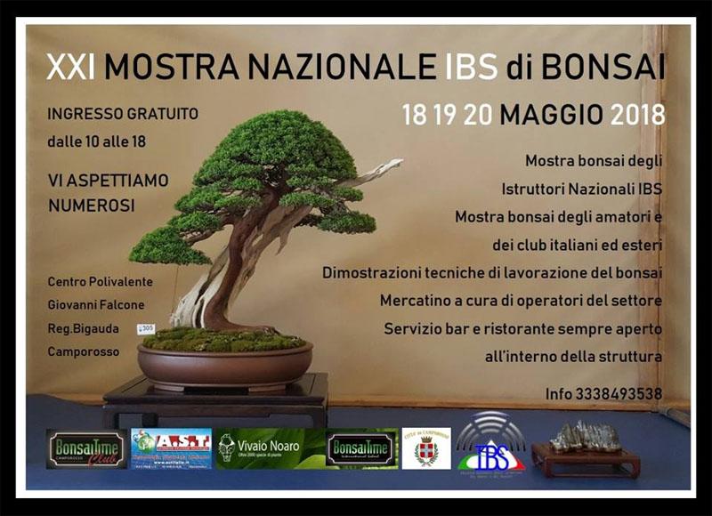 Exhibition Of Bonsai At Centro Polivalente G Falcone At Camporosso
